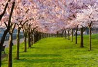 large_your-photos-spring-trees1