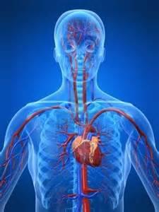 cardio system 2